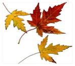 Autumn002