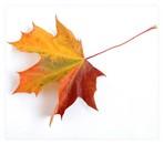 Autumn003