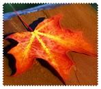 Autumn004