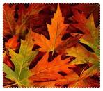 Autumn005