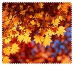 Autumn006