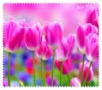 Spring008