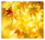 Autumn012