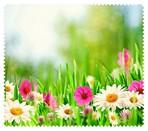 Spring013