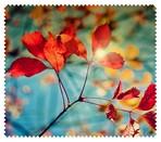 Autumn013