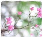 Spring026